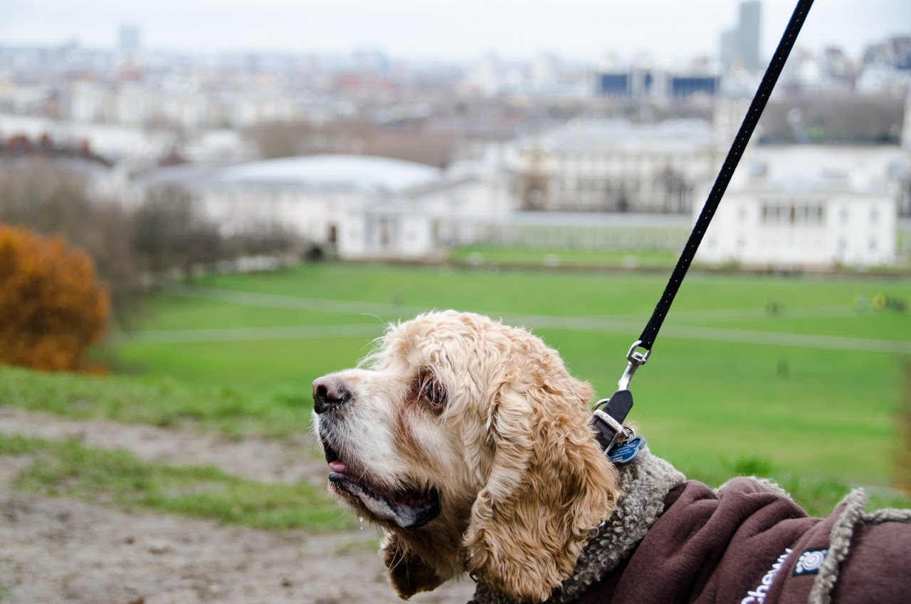 Chewy at Greenwich Park