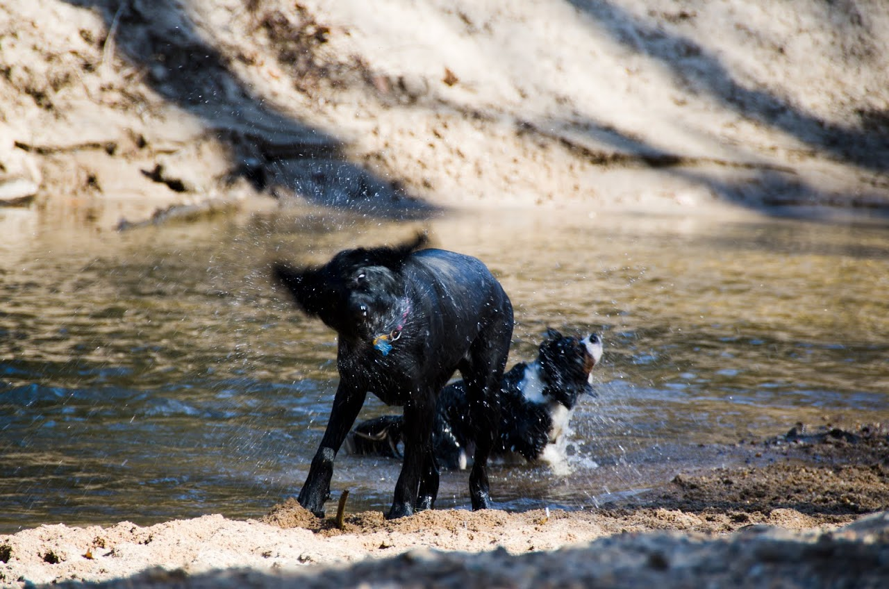 Dogs splashing at Herbert Taylor Park