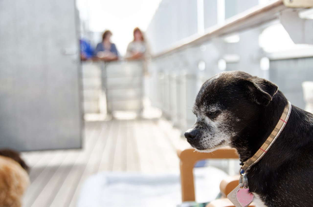 Dog on the QM2